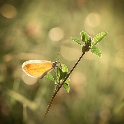 fotografie - Okřídlené světlo I