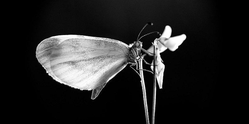 fotografie - Okřídlené světlo II