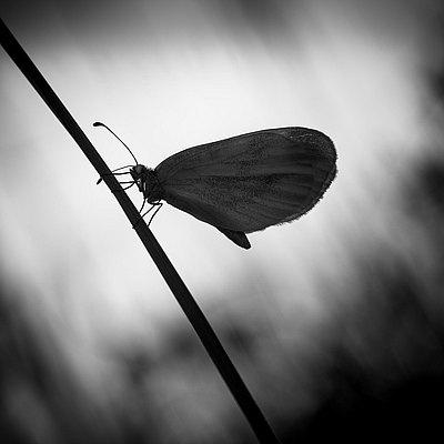 fotografie - Okřídlené světlo III