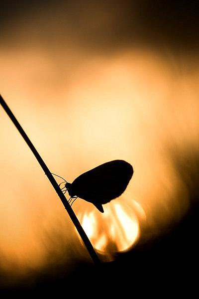 fotografie - Okřídlené světlo IV