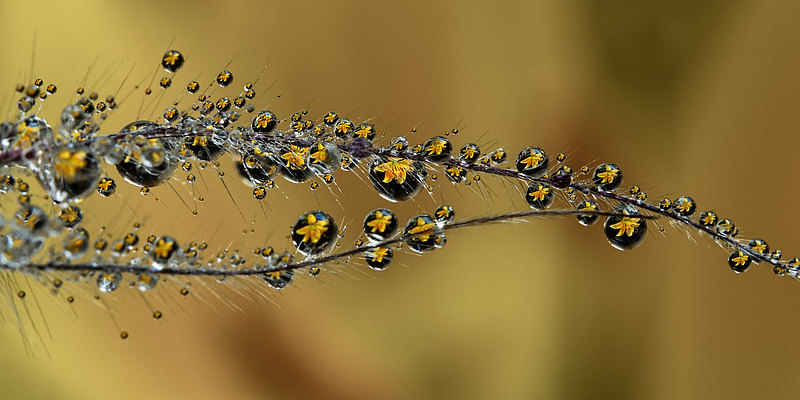 fotografie - Šperková liliová I