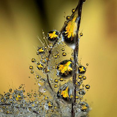 fotografie - Šperková liliová III