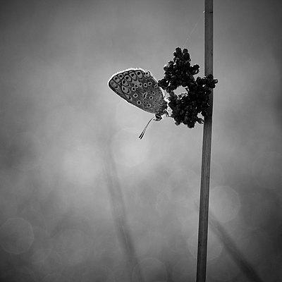 fotografie - Lahodná jemnost VI