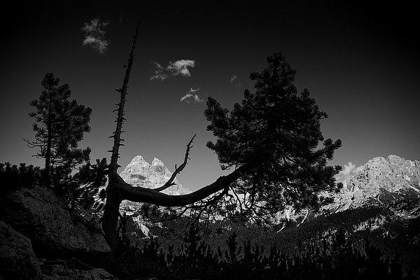 fotografie - Houževnatost života